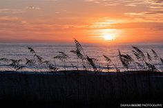 Amelia Island Guide - The Official Website of Amelia Island, FL and the Golden Isles. Amelia Accommodations, Hotels, Vacation Rentals, Restaurants, Events, Entertainment, and more!