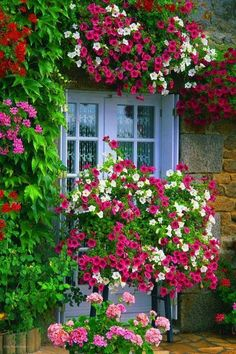 Take A Look At These Great Horticulture Tips! - My Easy Garden Ideas Wonderful Flowers, Love Flowers, Balcony Flowers, Growing Tomatoes In Containers, Container Flowers, Window Boxes, Easy Garden, Flower Boxes, Horticulture