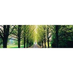 Tree-lined road Libin vicinity Belgium Canvas Art - Panoramic Images (36 x 12)
