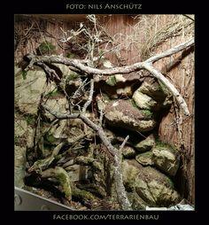 Bild 5: Terrarium für 1.1 Varanus Auffenbergi von Nils Anschütz. Das Becken hat einen 45 Liter Wasserteil. An Beleuchtung wurde folgendes verbaut: 3x 70w HCI, 1x 70w Solar Raptor, 1x 70w Reptiles Expert sowie 1x 80w RAR 38. Gefällt Euch dieses Terrarium? Dann speichert das Album als Inspiration auf Eurer Pinnwand!