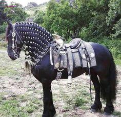 The black horse armor Most Beautiful Horses, Pretty Horses, Horse Love, Animals Beautiful, Arabian Horse Costume, Horse Costumes, Largest Horse Breed, Medieval Horse, Horse Braiding