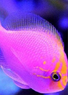 aquatic life                                                                                                                                                     More
