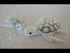 Albino Green Sea Turtle Tutorial, Collaboration with CoolRiceBunnies - YouTube