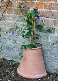 A Great Idea to Protect Tender Clematis from Winter & Wilt. Not Cheap to Buy, But if Someone is Handy with a Stone Cutter!! Or Perhaps A Cheap Plastic Pot Could Be Used Instead, Trenching it in the Ground to Stop them Blowing Away...