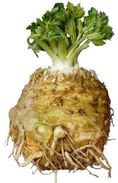 Celeriac, Stilton and Apple Soup Recipe With Celery Root, Celeriac Recipes, Celeriac Soup, Fruits And Vegetables, Veggies, Celerie Rave, Apple Soup, English Kitchens, Vegetable Garden