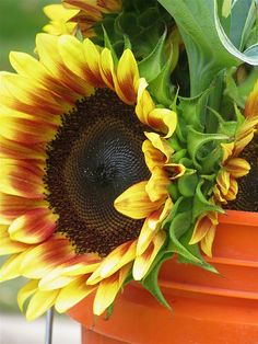 Sunflower. When he was little, I would take my grandson to a farmers market every Thursday, and I'd buy three sunflowers. We'd name the colors, count petals etc. They were a great learning tool.