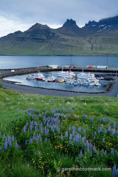 View over Stodvarfjordur harbour, Austurland, Iceland. Stock Photo