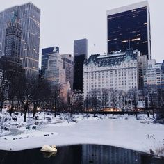 this is the prettiest photo of New York & Central Park in the snow ever taken. TUMBLR Source: forgottenships