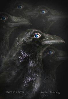 Raven anette blomberg...med ljusblått i blick...