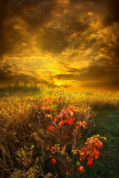 ~ Shine Your Light For The World To See ~  By Phil Koch Taken on: October 25, 2013 Location: Wisconsin, USA.