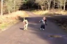 Dog's reaction to child and puddle