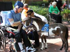 Therapy Horses of Gentle Carousel is an all volunteer 501(c)(3) nonprofit charity. The teams of tiny therapy horses visit over 25,000 adults and children each year inside hospitals, hospice programs, and with children who have experienced traumatic events. therapy horse horse therapy miniature horses charity horses hero most heroic pet