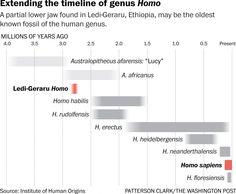 Donde queda el hallazgo de la mandibula de Ledi-Geraru dentro de la cronología humana