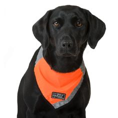 Hurtta Lifeguard Hundehalstuch neon-orange aus der Hurtta Lifeguard Kollektion