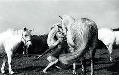 Oleg Kulik - Horses of Bretagne Saatchi Gallery, Galleries In London, Les Oeuvres, Contemporary Art, Stage, Art Gallery, Internet, Horses, Pop