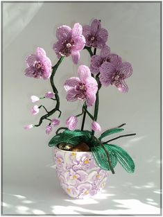eading Orchid Flower in Pot