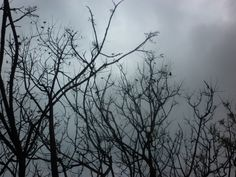 #photo #naturaleza