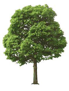 Banyan Tree Painting Digital design tools o...