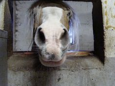 Equestrian, Goats, Cow, Animals, Animais, Animales, Animaux, Horseback Riding, Animal