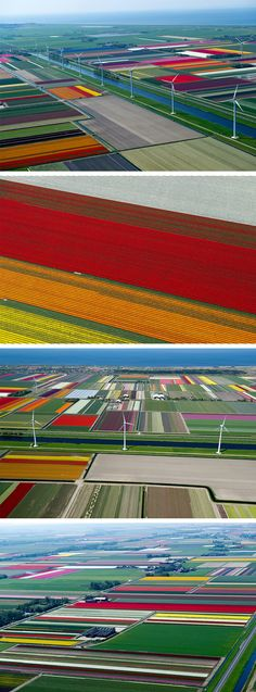 tulip fields in the Nederlands - photos taken from a prop plane