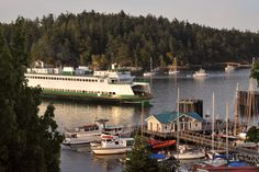 New Weekly Article - Friday Harbor