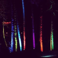 #winterlichter #palmengarten #palmengartenfrankfurt #frankfurt #frankfurtammain #trees