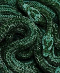 New photography dark forest green ideas Dark Green Aesthetic, Rainbow Aesthetic, Aesthetic Colors, Aesthetic Photo, Aesthetic Pictures, Green Aesthetic Tumblr, Photography Aesthetic, Character Aesthetic, Aesthetic Light
