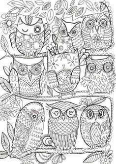 Owls color