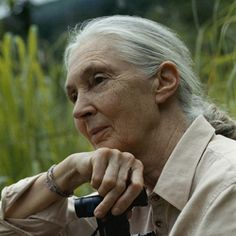 Founder of the Jane Goodall Institute & UN Messenger of Peace In July 1960, Jane Goodall began her landmark study of chimpanzee behavior in what is now Tanzania. Her work at Gombe Stream would become the foundation of future primatological research and redefine the relationship between humans and animals | the Jane Goodall Institute