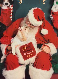 santa christmas christmas 2015 friend 2 shih tzu charts father christmas christmas time animais graphics - Christmas Furry