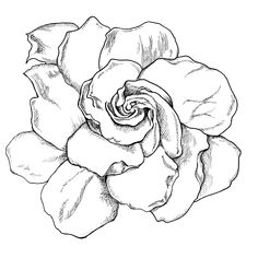 gardenia drawing | Live Life Creatively: Project 365 - Days 116-124 A Springboard for ...