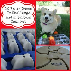 Ways to Challenge Your Dogs Mind