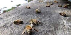 petition: Stop the Dangerous Monsanto-Bayer Merger