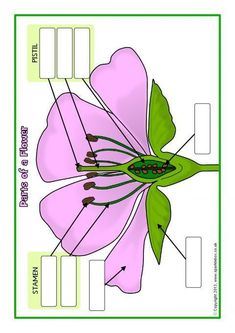Parts of a Plant and Flower Posters/Worksheets Science Worksheets, Science Lessons, Science For Kids, Science Activities, Science And Nature, Science Experiments, Biology Lessons, Teaching Plants, Teaching Biology