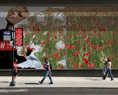 angeloarte: Poppies in Kassel - Papaveri a Kassel
