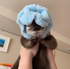 steer---queer said: got any baby otters? :D Answer: Here you go 😊 Enjoy ❤️ source daily_otters Otters Cute, Cute Ferrets, Baby Otters, Otters Funny, Cute Little Animals, Cute Funny Animals, Fluffy Animals, Animals And Pets, Weird Pictures