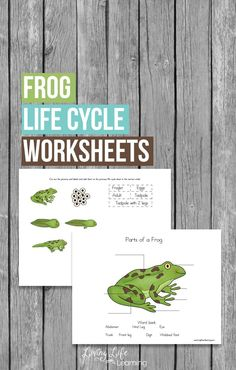 Learn to identify the different parts of a frog and the stages of growth of frogs with this cool frog life cycle worksheets for frog lovers. You'll see how they transform from egg, to tadpole to adult frogs.