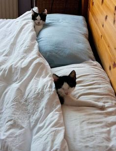 """This is our bed, right?"" Where do your cats love to sleep?"