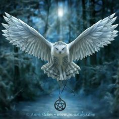 Owl with pentagram