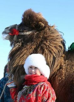 Mongolia: Young Woman With Her Camel.
