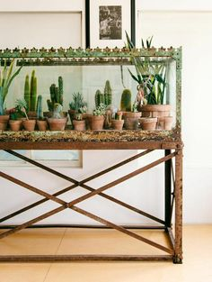 What a clever idea for a succulent display: arranging dozens of small pots within an emptied-out aquarium or a large glass case.