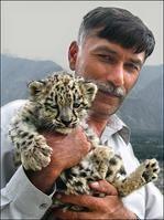 Snow leopard cub - Hunza Pakistan