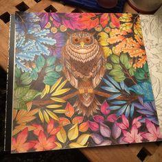 Which one shall I do next?!!!#johannabasford #secretgarden #owl #rainbow #colours #coloringbook #therapy #art #johannabasfordsecretgarden #jardimsecretofans #jardimsecretoinspire #florestaencantadatop #repost #picoftheday #photooftheday #pretty #ugly #beautiful #life #creative #fabercastell #staedtler #ink #maped #instagram #igdaily #terapianojardim #florestaencantada #nossojardimsecreto #oceanoperdido