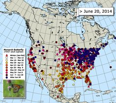 This animation of the wondrous monarch butterfly migration was the work of thousands of citizen scientists
