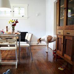dog house #interiors #dining