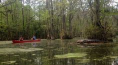 A desolate cesspool filled with mosquitoes is not what you find at this millpond. While the park's name doesn't have an attractive ring like the nearby Great Dismal Swamp, Merchants Millpond State …