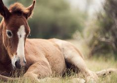 What a beautiful baby horse. In my Texas baby's room there should be such a darling photo of a foal.  -kwa