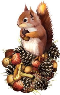 Squirrel and nuts Animal Paintings, Animal Drawings, Cute Drawings, Illustrations, Illustration Art, Alfabeto Animal, Squirrel Art, Fall Clip Art, Otters
