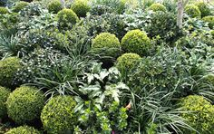 Foliage for texture. At an elite level!  Admittedly this is a show garden, and this concentration of planting isn't really replicable in a permanent garden, but the combination of foliage textures could definitely be used. (Peta Donaldson (Natural Design), AGSS 2014 Silver Award.