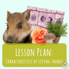 The Characteristics of Living Things - an entire lesson plan you can use to teach the characteristics and needs of living things in science class! Biology Lessons, Science Lessons, Teaching Science, Life Science, Science Classroom, Teaching Ideas, Middle School Activities, Middle School Science, Science Lesson Plans